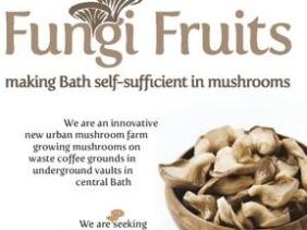 fungi fruitsfungi fruits